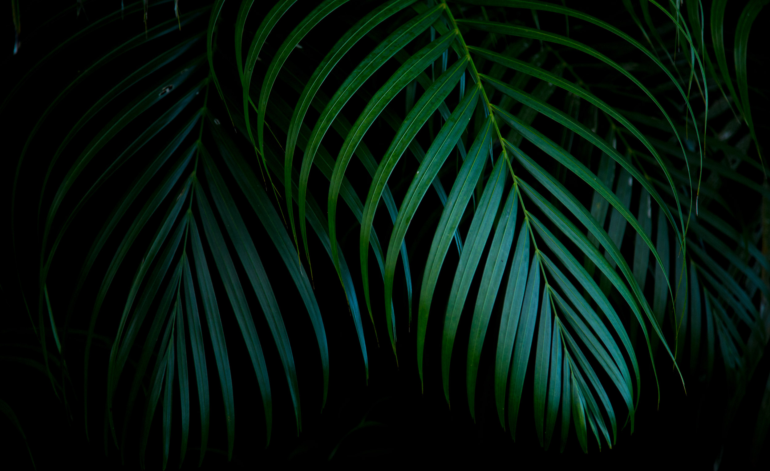 beauty in the details_hawaii_ferns_jed_share_K156448
