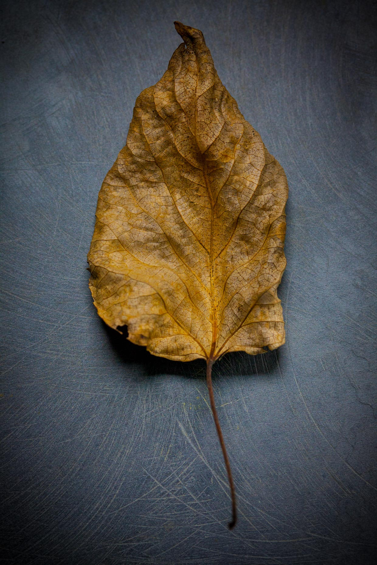 Beauty in the Details-a leaf-Seattle-7019