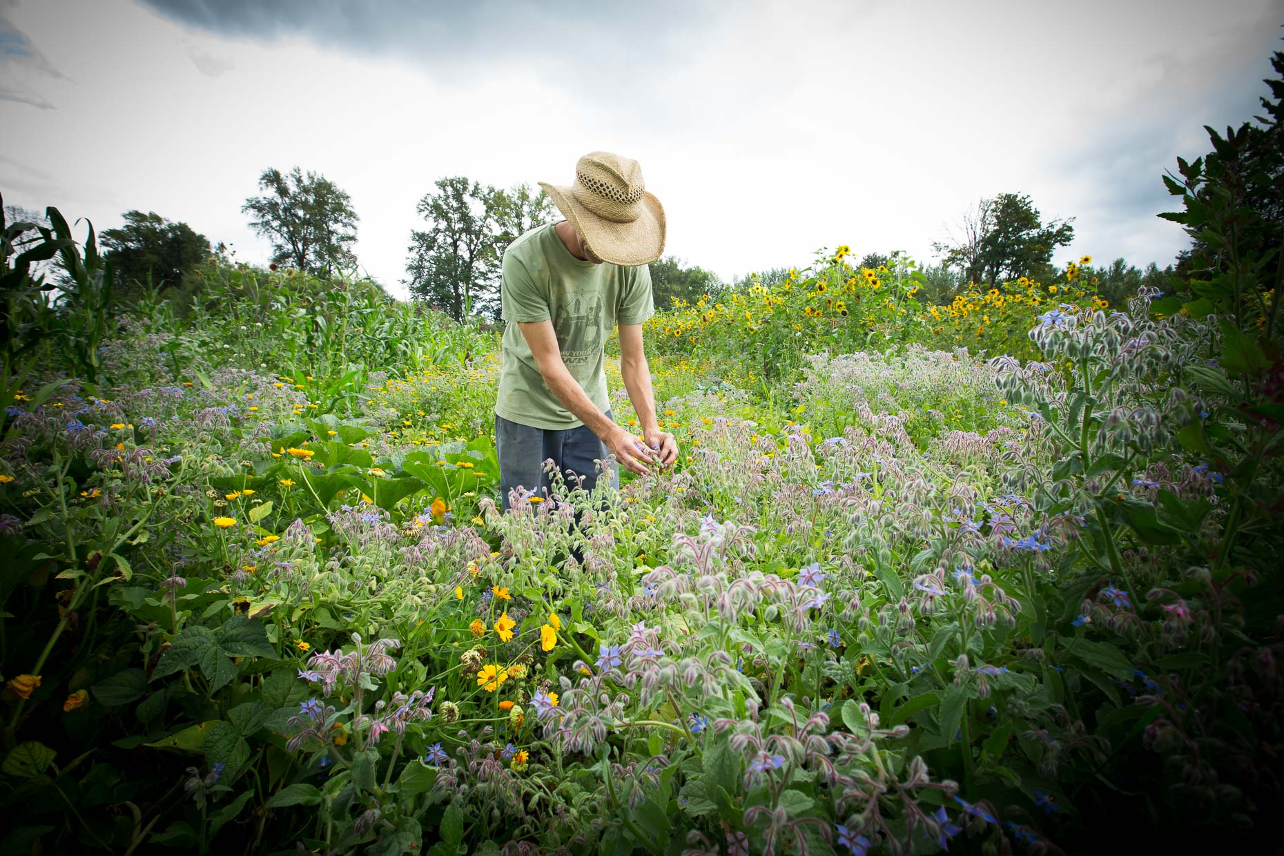 Visual Storytelling  | Sustainable agriculture  on the farm | Washington State near Seattle